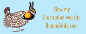 illustration_website