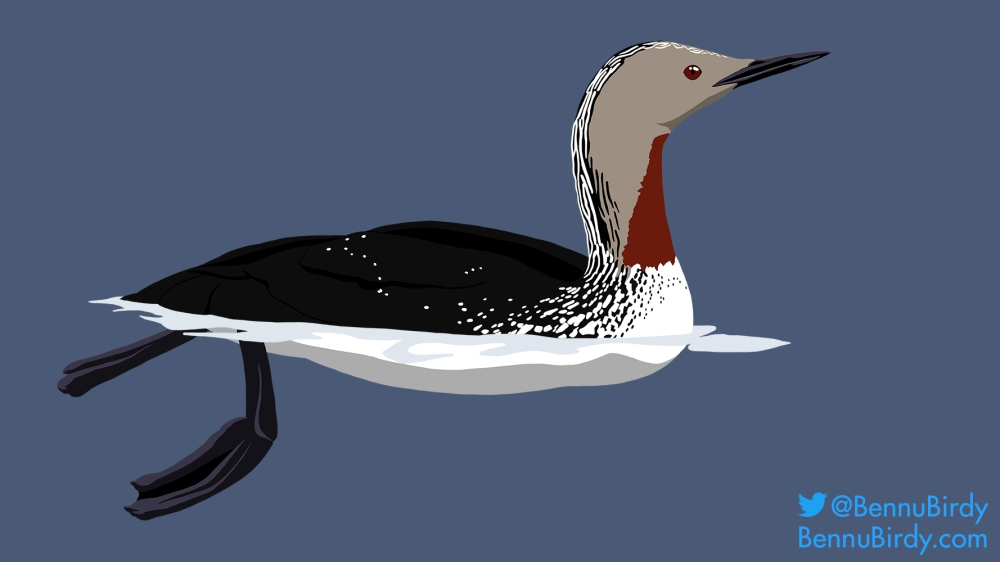 red_throated_loon