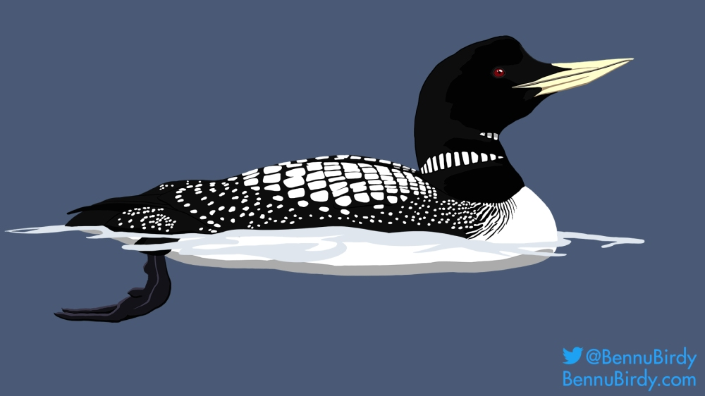 yellow_billed_loon