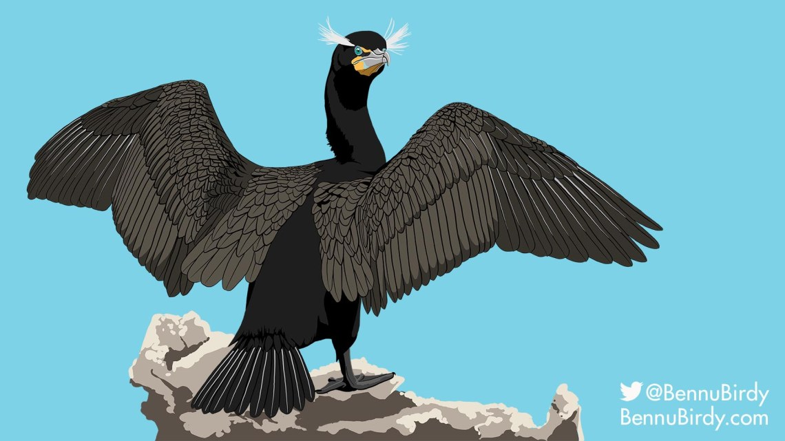 double_crested_cormorant