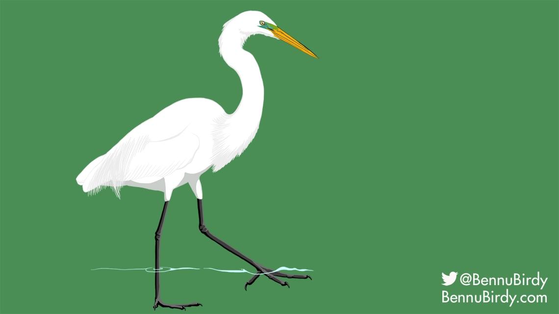 great_egret