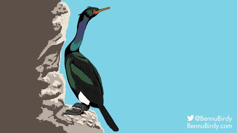 pelagic_cormorant