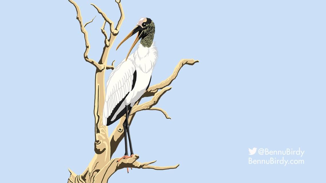 wood_stork.jpg