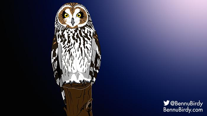 short_eared_owl