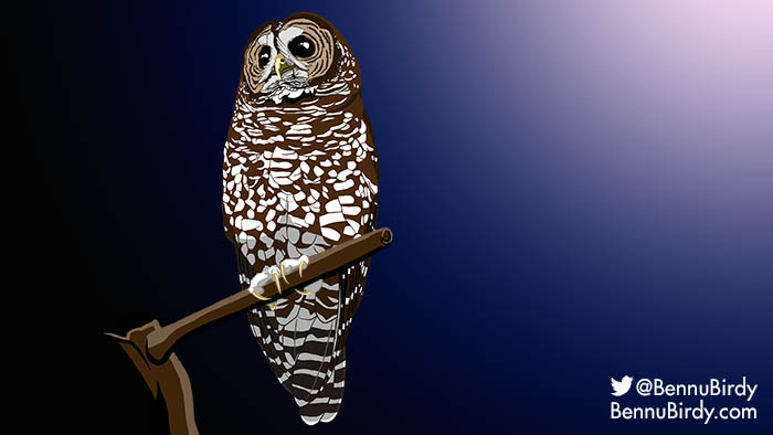 spotted_owl