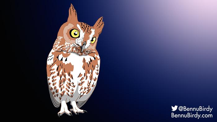 eastern_screech_owl