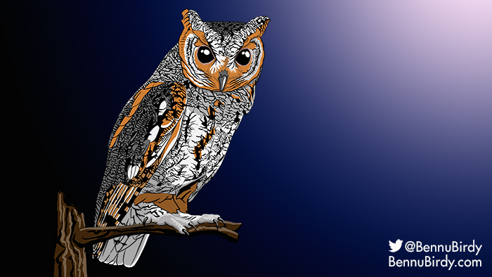 flammulated_owl