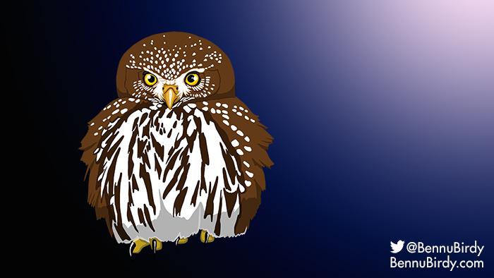 northern_pygmy_owl