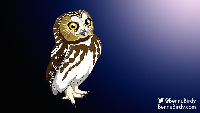saw_whet_owl