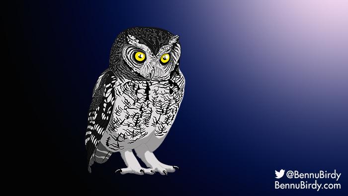 whiskered_screech_owl