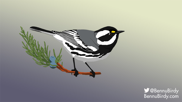 black_throated_gray_warbler