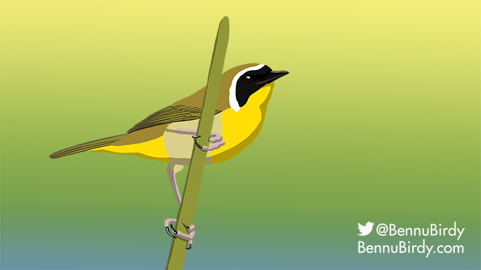 common_yellowthroat