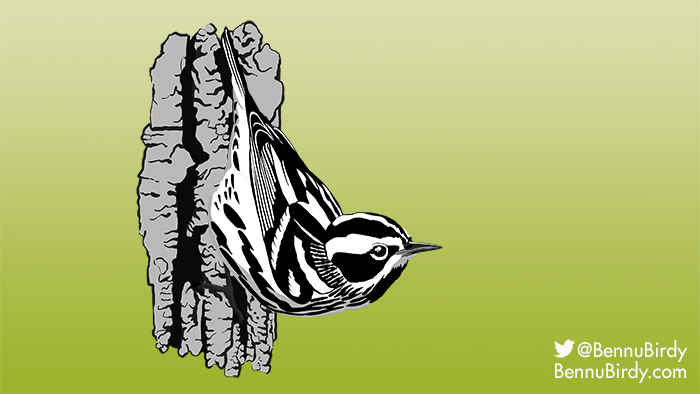 black_and_white_warbler.jpg