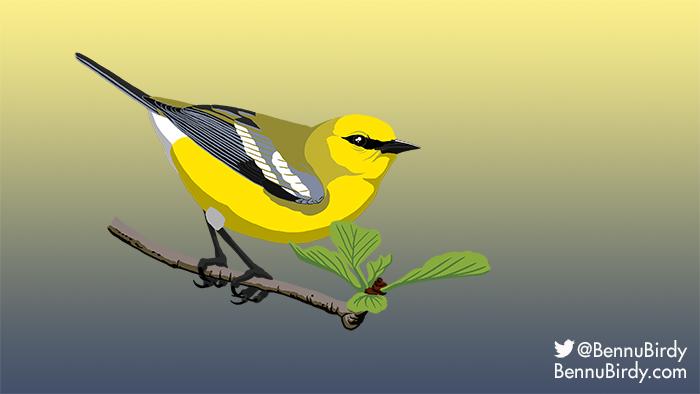 blue_winged_warbler