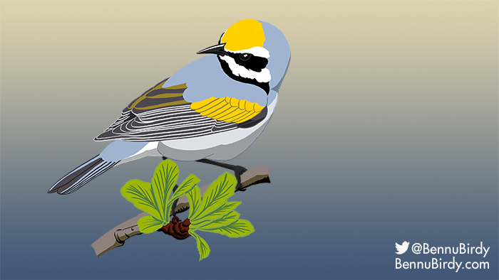 golden_winged_warbler