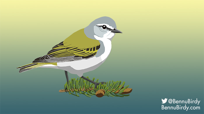 tennessee_warbler