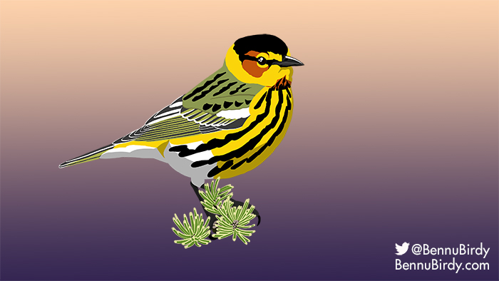 cape_may_warbler.jpg