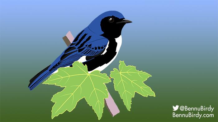 black_throated_blue_warbler.jpg