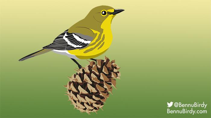 pine_warbler.jpg