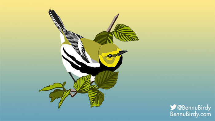 black_throated_green_warbler