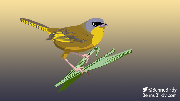 gray_crowned_yellowthroat.jpg